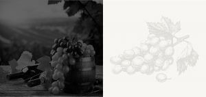 Howling Wolves Wines - Premium grapes