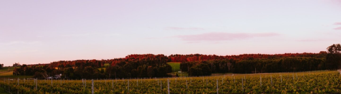 Vineyard - Howling Wolves Wines